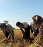 Hvert sjette menneske i verden sulter. Foto: AFP.