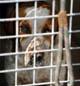 Denne hunden skal snart dø. Foto: Colourbox.